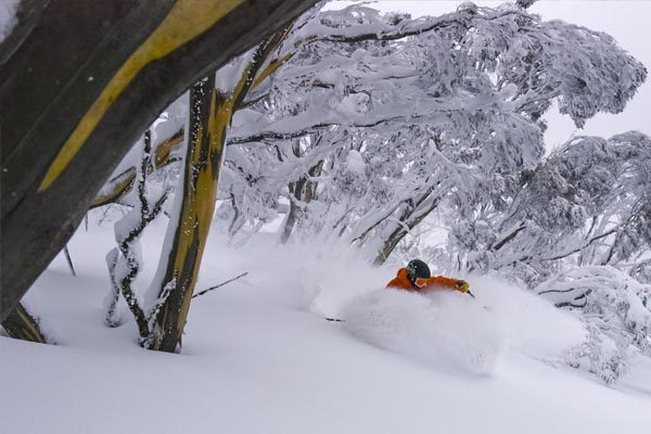 Skiing among the snow gums